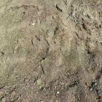 硫化矿尾砂,现货60万吨,含铅锌8一9品位,含硫25一30品位